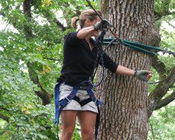 Climbing 3 | Domaine du Pignoulet