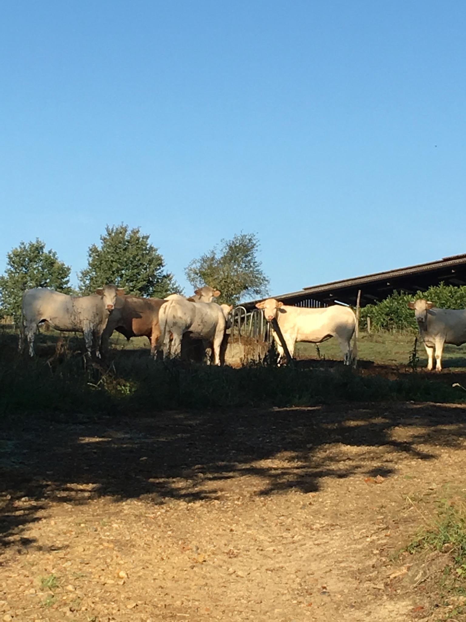 Local Farm | Domaine du Pignoulet, Gascony, France